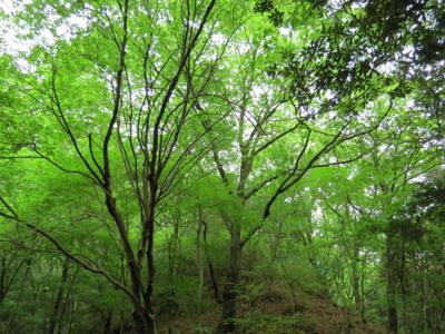 f:id:noronoyama:20120502153643j:image