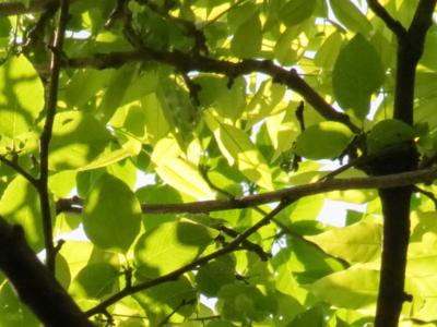 f:id:noronoyama:20120505100213j:image