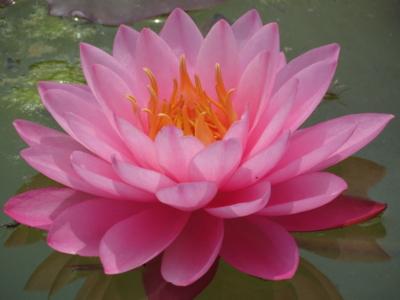 f:id:noronoyama:20120519125852j:image