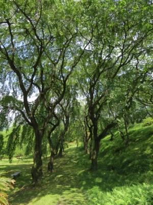 f:id:noronoyama:20120519132450j:image