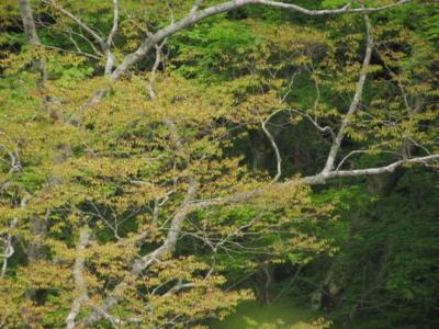 f:id:noronoyama:20120526094113j:image