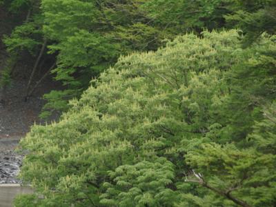 f:id:noronoyama:20120526095034j:image