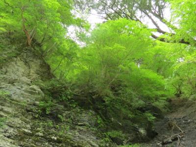 f:id:noronoyama:20120526095126j:image