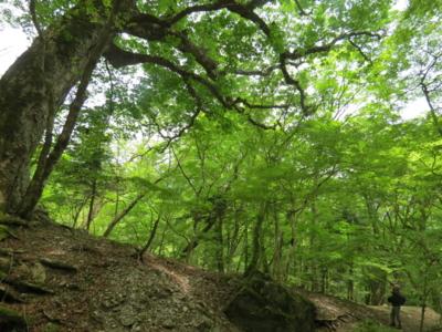 f:id:noronoyama:20120526124952j:image