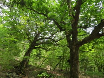 f:id:noronoyama:20120526125308j:image