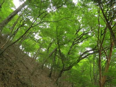f:id:noronoyama:20120526131915j:image