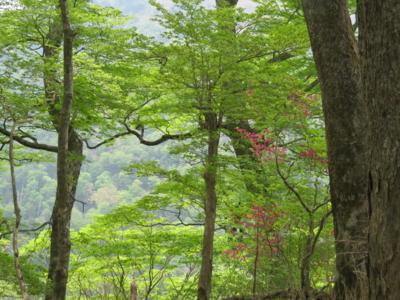 f:id:noronoyama:20120526133414j:image