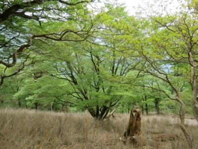 f:id:noronoyama:20120526134456j:image
