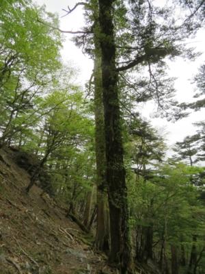 f:id:noronoyama:20120526150432j:image