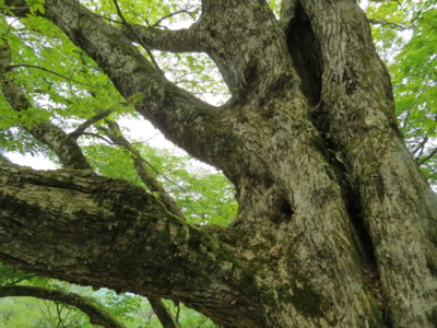 f:id:noronoyama:20120526151558j:image