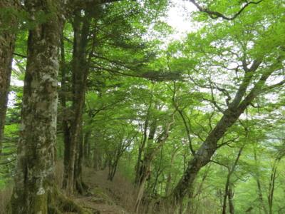 f:id:noronoyama:20120526151841j:image