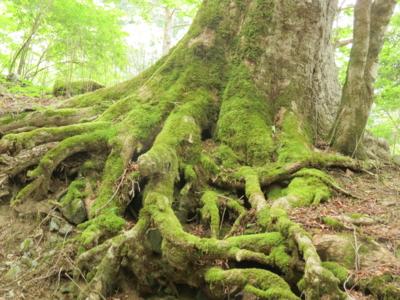 f:id:noronoyama:20120526155106j:image
