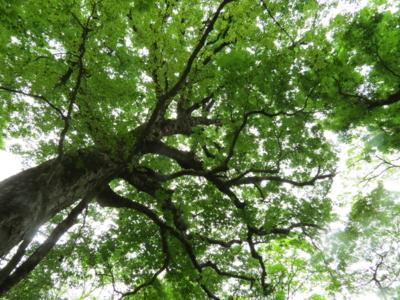f:id:noronoyama:20120526155121j:image