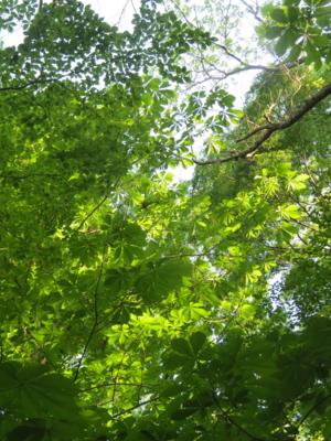 f:id:noronoyama:20120527063222j:image