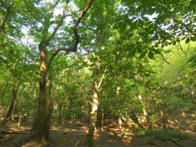 f:id:noronoyama:20120527064832j:image