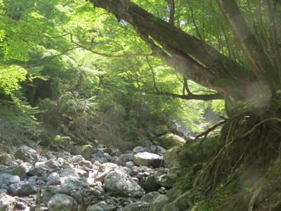 f:id:noronoyama:20120527100345j:image