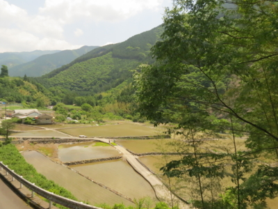 f:id:noronoyama:20120527114152j:image