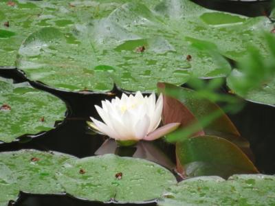 f:id:noronoyama:20120609104502j:image