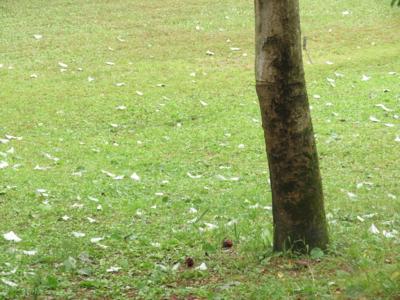 f:id:noronoyama:20120609120523j:image
