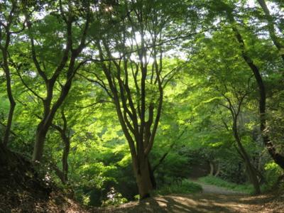 f:id:noronoyama:20120610165120j:image