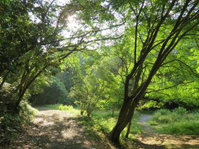 f:id:noronoyama:20120610165849j:image