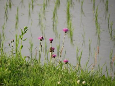 f:id:noronoyama:20120610174902j:image
