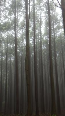 f:id:noronoyama:20120621082703j:image
