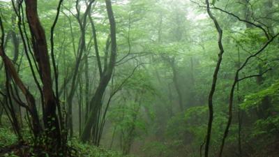 f:id:noronoyama:20120621083842j:image