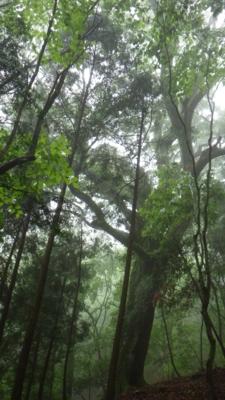 f:id:noronoyama:20120621084428j:image