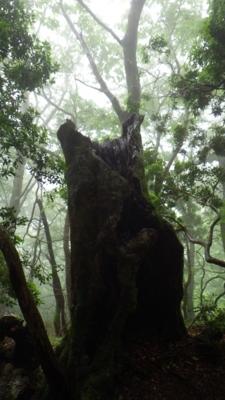 f:id:noronoyama:20120621084601j:image