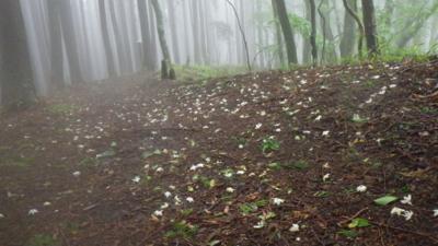f:id:noronoyama:20120621090033j:image