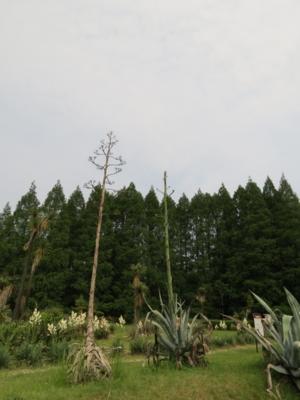 f:id:noronoyama:20120623143254j:image