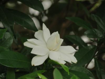 f:id:noronoyama:20120624085943j:image