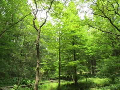 f:id:noronoyama:20120624112911j:image