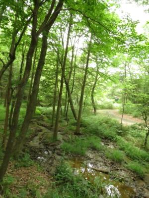f:id:noronoyama:20120624113507j:image
