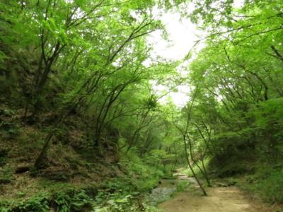 f:id:noronoyama:20120624115815j:image