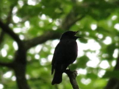 f:id:noronoyama:20120624122505j:image