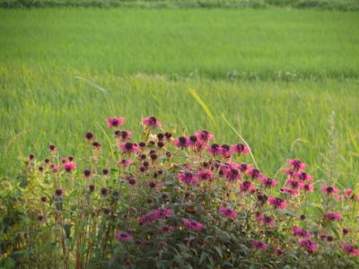 f:id:noronoyama:20120708190042j:image