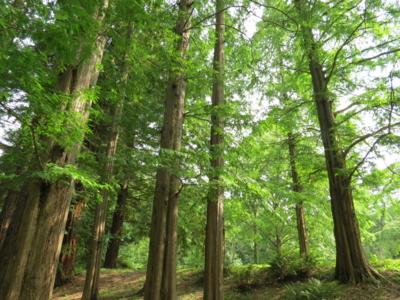 f:id:noronoyama:20120714154053j:image