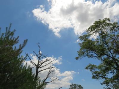 f:id:noronoyama:20120716134046j:image