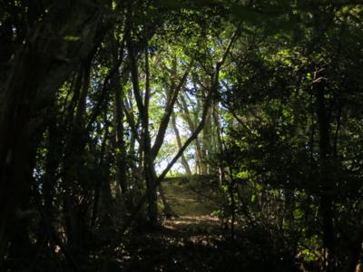 f:id:noronoyama:20120716152517j:image
