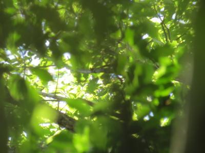 f:id:noronoyama:20120716153623j:image