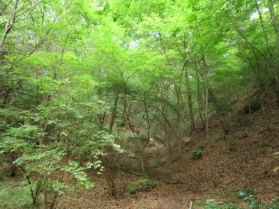 f:id:noronoyama:20120722155004j:image