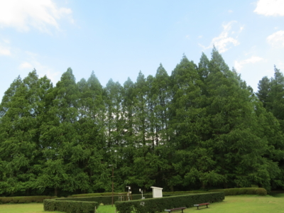 f:id:noronoyama:20120722155707j:image