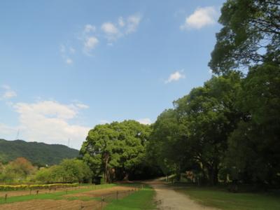 f:id:noronoyama:20120722155958j:image