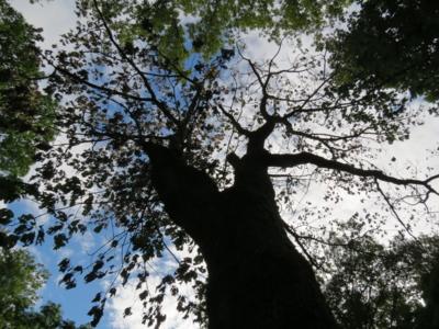 f:id:noronoyama:20120804161108j:image