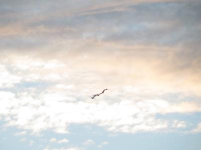 f:id:noronoyama:20120806051913j:image