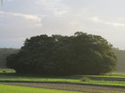 f:id:noronoyama:20120806053929j:image