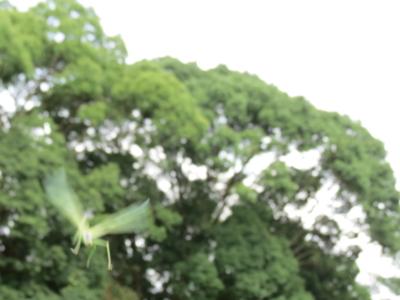 f:id:noronoyama:20120811150819j:image