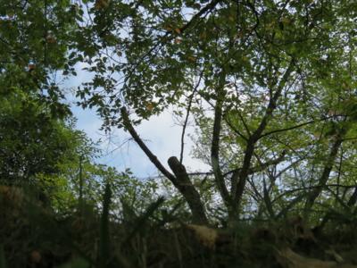 f:id:noronoyama:20120811151914j:image